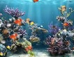 Coral Reef Adventure Aquarium 3D Screensaver